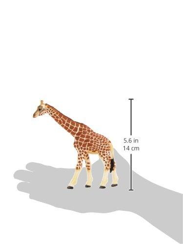 Scheich Giraffe Female-5930