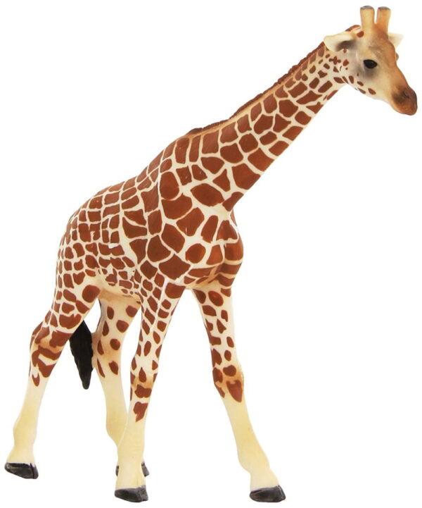 Scheich Giraffe Female-5929