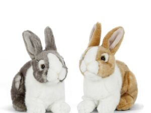Domesticated rabbits have been known to make ideal house companions for any animal lover as they can be litter box trained and may come when called!  Pet rabbits need regular exercise and a balanced diet in order to remain healthy and keep a soft shiny coat. Choose between two different colours or adopt both!